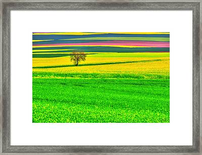 Standing Tall Among Colors Framed Print by Midori Chan