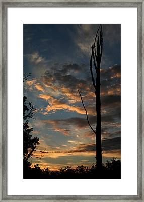 Standing Tall Among The Trees Framed Print