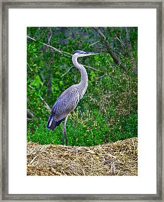 Standing Tall And Proud Wil 338 Framed Print