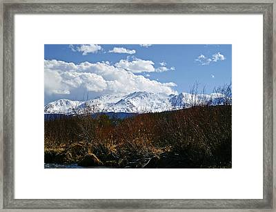 Standing Tall Framed Print by Jeremy Rhoades