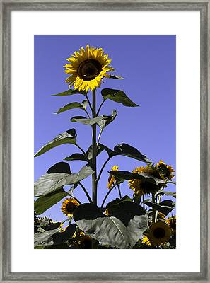 Standing Tall Framed Print by John Holloway