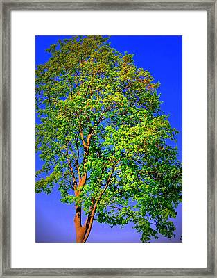 Standing Tall Framed Print by Mary Beth Landis