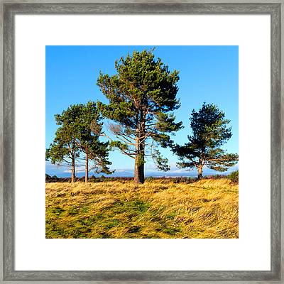 Standing Tall On The Fields Of Culloden Framed Print by Mark E Tisdale