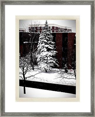 Framed Print featuring the photograph Standing Tall by Zinvolle Art