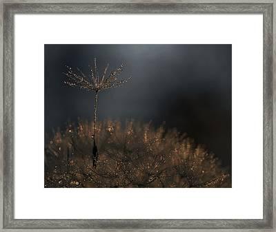 Standing Toward The Light... Framed Print
