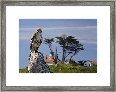 Framed Print featuring the photograph Standing Watch by Betty Depee