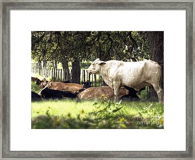 Standing Watch Cattle Photographic Art Print Framed Print by Ella Kaye Dickey