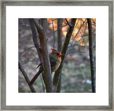 Framed Print featuring the photograph Standing Watch by Linda Segerson