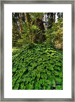 Stanley Park In Spring Time Framed Print by Terry Elniski