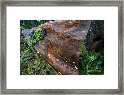 Stanley Park Log Framed Print by Terry Elniski
