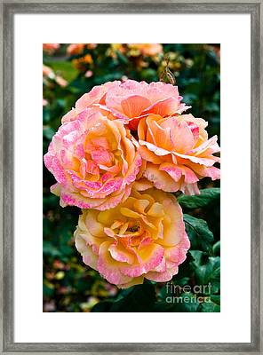 Stanley Park Rose Garden 3 Framed Print by Terry Elniski