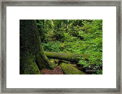 Stanley Park Setting Framed Print by Terry Elniski