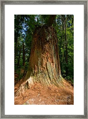Stanley Park Trees 11 Framed Print by Terry Elniski