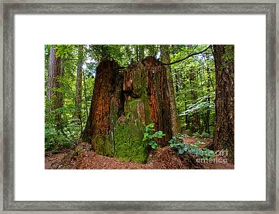 Stanley Park Trees 12 Framed Print by Terry Elniski