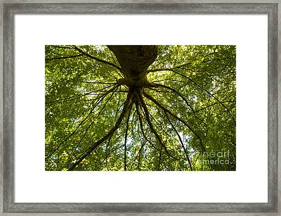 Stanley Park Trees 13 Framed Print by Terry Elniski