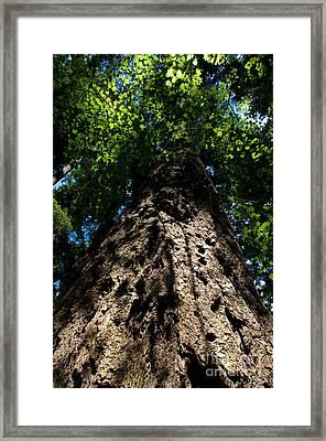 Stanley Park Trees 14 Framed Print