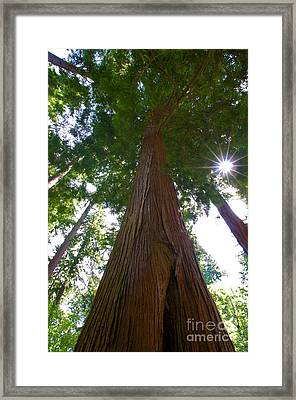 Stanley Park Trees 15 Framed Print by Terry Elniski