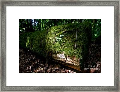 Stanley Park Trees 16 Framed Print by Terry Elniski