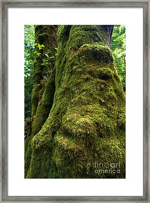 Stanley Park Trees 17 Framed Print by Terry Elniski