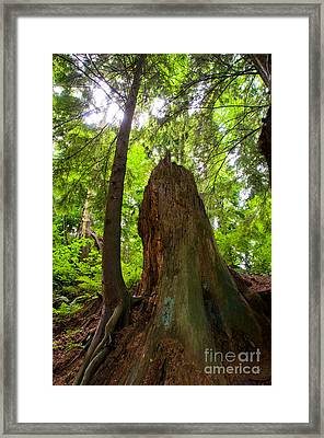 Stanley Park Trees 18 Framed Print by Terry Elniski
