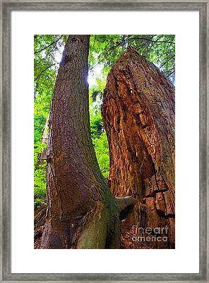 Stanley Park Trees 19 Framed Print by Terry Elniski
