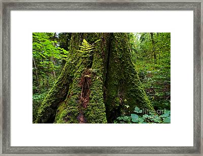 Stanley Park Trees 20 Framed Print by Terry Elniski