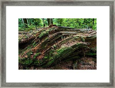 Stanley Park Trees 21 Framed Print by Terry Elniski
