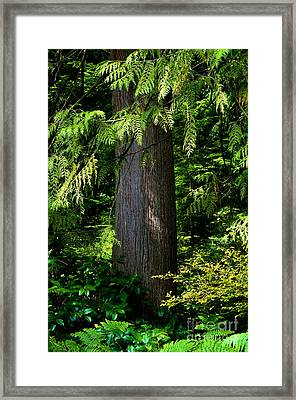 Stanley Park Trees 24 Framed Print by Terry Elniski