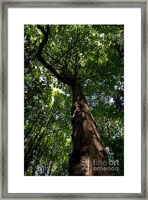 Stanley Park Trees 8 Framed Print by Terry Elniski