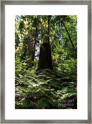 Stanley Park Trees 9 Framed Print by Terry Elniski