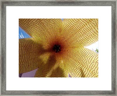 Framed Print featuring the photograph Stapelia Grandiflora by Janina  Suuronen