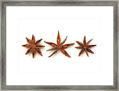 Star Anise Fruits Framed Print