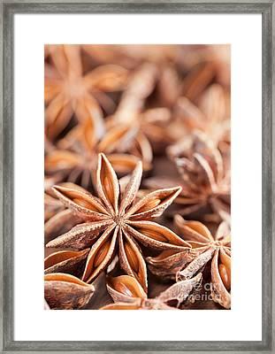 Star Anise Framed Print by Shawn Hempel