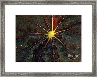 Star Bright Framed Print by Sabrina L Ryan