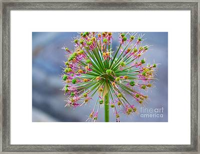 Framed Print featuring the photograph Star Burst by John S