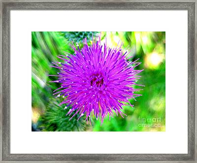 Framed Print featuring the photograph Star Burst by Kathy Bassett