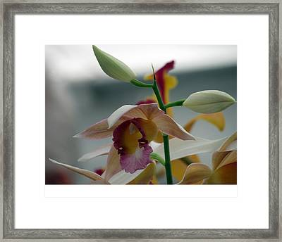 Star Framed Print by Debi Singer