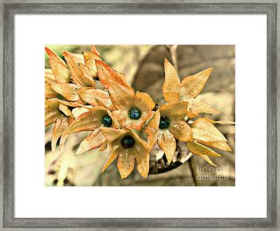 Star Fade Diffused Framed Print