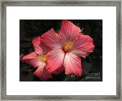 Star Flower Framed Print by Barbara Griffin