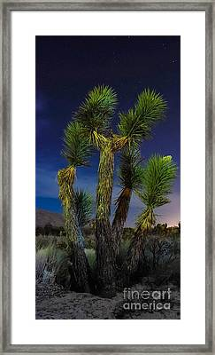 Star Gazing Framed Print by Angela J Wright