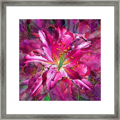 Star Gazing Stargazer Lily Framed Print