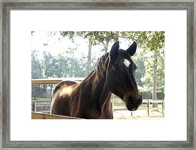 Star Framed Print by Laurie Perry