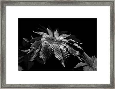 Star Leaf Framed Print