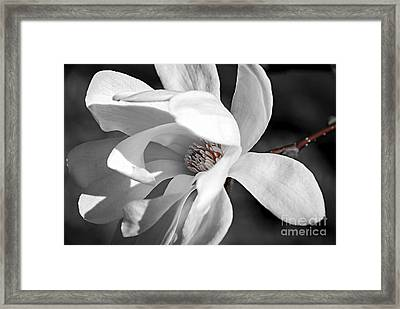 Star Magnolia Flower Framed Print