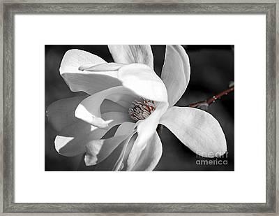 Star Magnolia Flower Framed Print by Elena Elisseeva