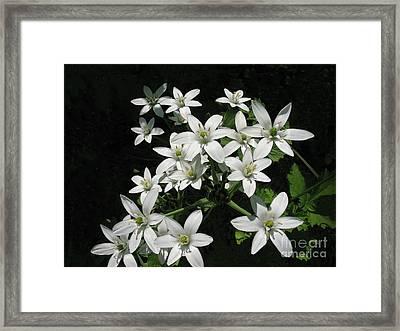Star Of Bethlehem Framed Print by Ann Horn
