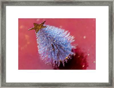Star Of Christmas Framed Print