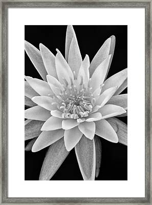 Star Of The Water Framed Print