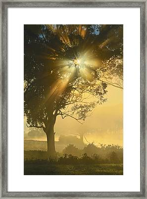 Star-shine Framed Print