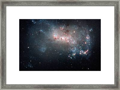 Starburst In Ngc 4449 Framed Print by Space Art Pictures